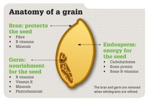 whole grain anatomy